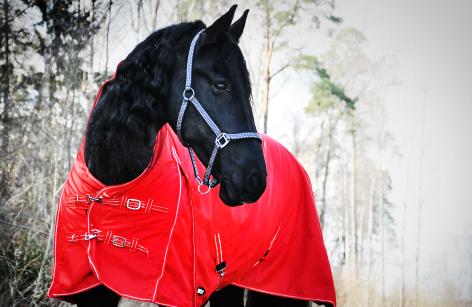 Hästtäcke - regntäcke för häst, 600D, halvhals, 100 gr fyllning, rött, framifrån
