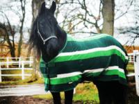Grönt fleecetäcke med normalhals