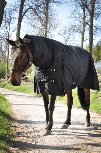 Vintertäcke häst 600 svart, fram