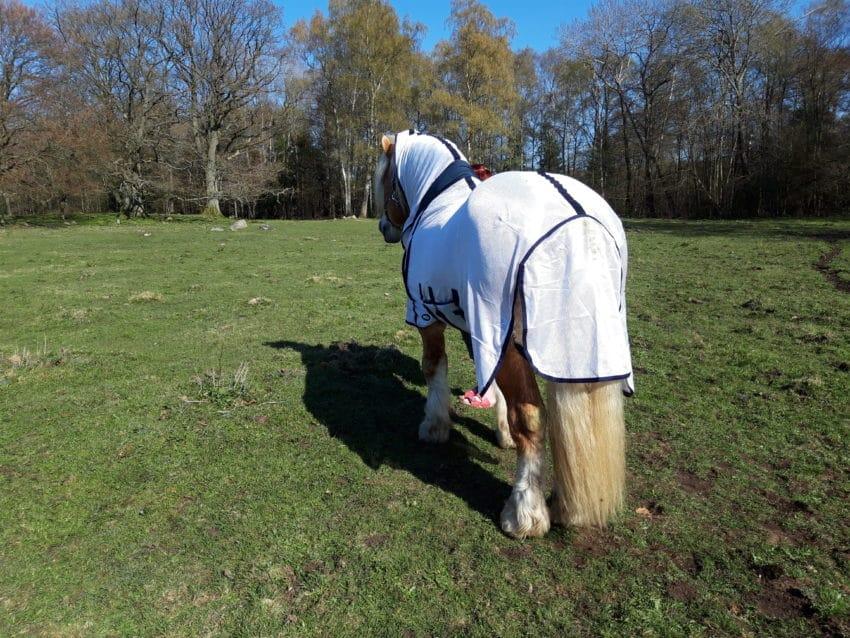 Flugtäcke grova hästar bakifrån