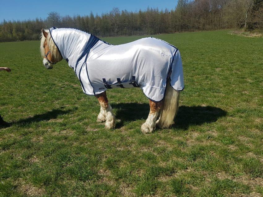 Flugtäcke grova hästar snett bakifrån