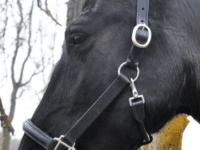 Lädergrimma för häst justerbar fodrad