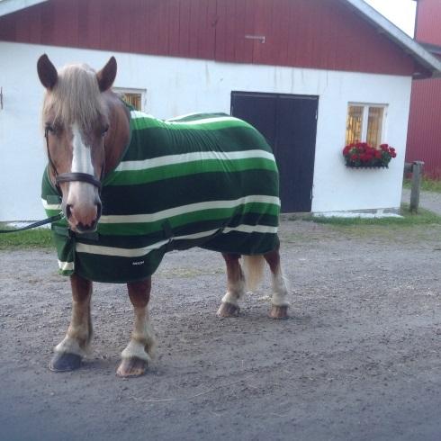 Fleecetäcke för grova hästar, grönt