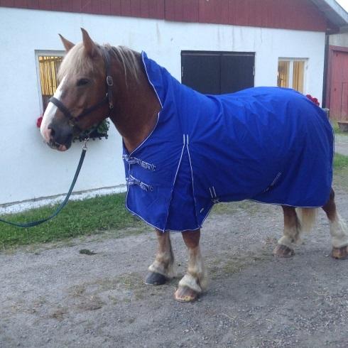 Regntäcke för grov häst, halvhals, blå
