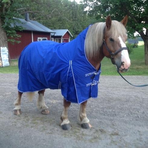 Hästtäcke - regntäcke för grova hästar, 600D, med halvhals utan fyllning, blå