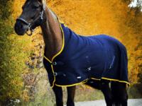 häst med ylletäcke