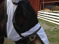 Flughuva med öron för häst, vit