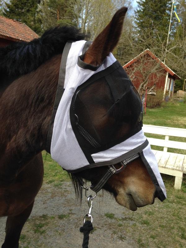 Flughuva för häst utan öron