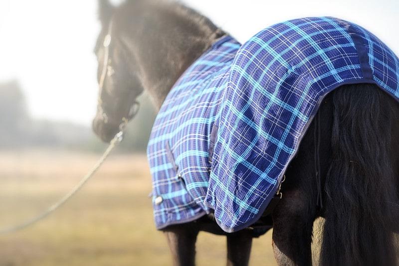 Våffeltäcke blått bak - rägntäcke häst