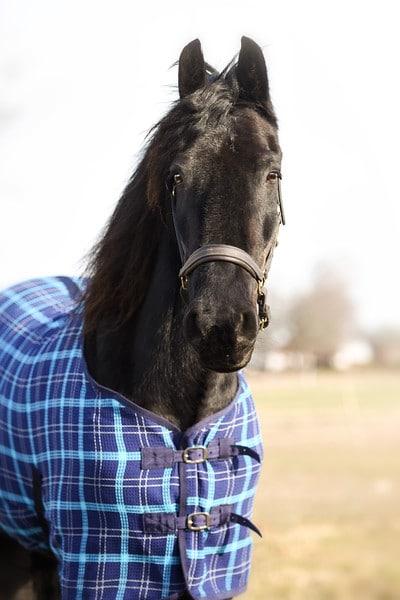 Regntäcke häst - Våffeltäcke blått med normal hals framknäppning