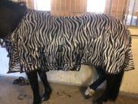 Hästtäcke - flugtäcke med avtagbar hals, zebrafärgat