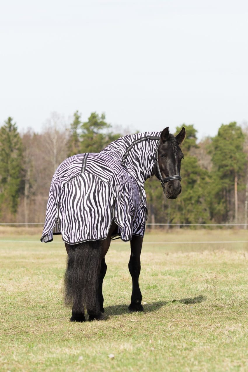 Flugtäcke / zebratäcle med avtagbar hals och rejäl svanslapp. Bild Tilde Wrangell