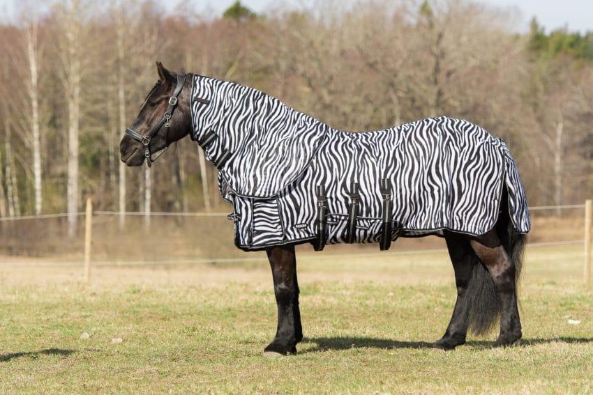 Flugtäcke häst - zebratäcke med avtagbar hals. Bild Tilde Wrangell