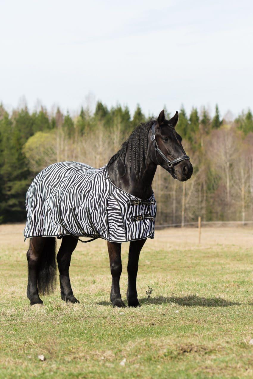 Zebratäcke utan hals med normalskärning. Bild Tilde Wrangell